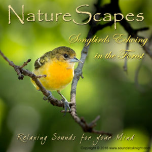 Songbirds Echoing in the Forest - Sounds by Knight
